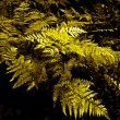 Fern — Stock Photo #1103995