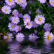 Flowers reflected in water — Stock Photo #1130032