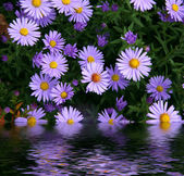 Flowers reflected in water — Stock Photo