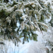 Stock Photo: Fur-tree branches