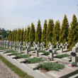 Stock Photo: Military burial place