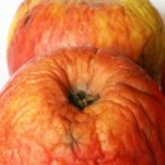 Bad apples — Stock Photo