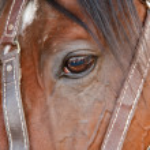 Eye of horse — Stock Photo