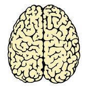 Beyin — Stok Vektör