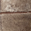 Fur of  ermine - Stock Photo