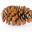 Pine cone isolated over white background - Stock Photo