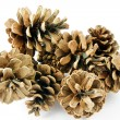 Fir cones on white — Stock Photo