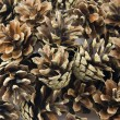 Pine cones background — Stock Photo