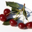 Ripe red cherries with shadow — Stock Photo