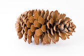 Pine cone isolated over white background — Stock Photo