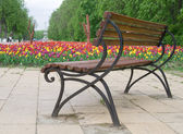 Brown bench near flower bed with tulips — Stock Photo