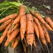 Fresh dug carrots — Stock Photo