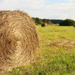 Closeup haystack on meadow - Stock Photo