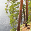 Pinetrees on lakeside in summer - Stock Photo