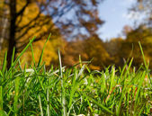 Green grass over autumnal forest backgro — Stock Photo