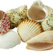 Collection of see shells — Stock Photo
