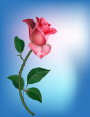 Rose on blue — Vector de stock