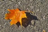Yellow leaf on ground — Stock Photo