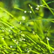 Royalty-Free Stock Photo: Grass with water drops