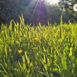 Sunny meadow - Foto Stock