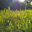 Royalty-Free Stock Photo: Sunny meadow