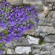 Stock Photo: Flowers on wall