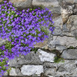 Flowers on wall - Stock Photo