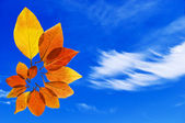 Nice color leaves on blue sky — Stock Photo