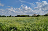 Wheat field, village and sky — Stock Photo