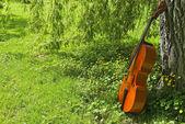 Viola in park — Stock Photo