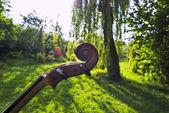 在公园的小提琴 — 图库照片