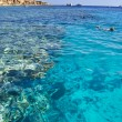 Reef in Red sea — Stock Photo #1330224