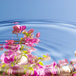 Stock Photo: Water ripples with flowers
