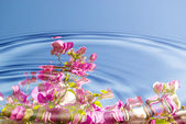 Water ripples with flowers — Stock Photo