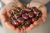 Hands full of cherry — Stock Photo