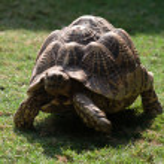 Big Turtle — Stock Photo