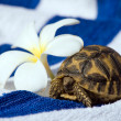 Royalty-Free Stock Photo: Baby Turtle With Tropic Flower
