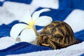 Baby Turtle With Tropic Flower — Stock Photo