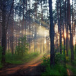 Stock Photo: Blurred mystery forest