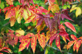 Branch with autumn leaves — Stock Photo