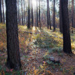 Autumn forest — Stock Photo #1176636