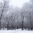 Stock Photo: Frozen woods