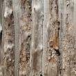 wooden background — Stock Photo #1626490