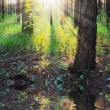 Sunset in the woods — Stock Photo