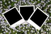 Zdjęcie na tle kwiatów — Zdjęcie stockowe