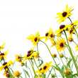Yellow rudbeckia — Stock Photo #1927598