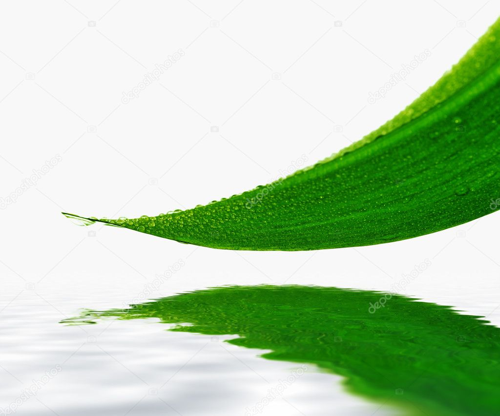 Drops on green leaf, reflection in water — Stock Photo #2044333