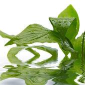 绿色的植物上滴 — 图库照片