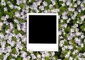Photo on floral background — Stock Photo