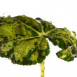 Green leaf with drops — Stock Photo #2192849